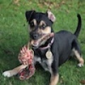 Dexter(Reserved)