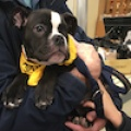 Rocco Puppy
