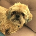 ROSIE - LHASO APSO  - RESERVED