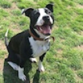 Ben - Special home needed x