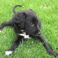 Rio Puppy